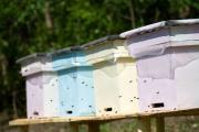 Promovarea apiculturii pe Valea Somesului